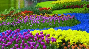 Keukenhof Gardens in Amsterdam Holland